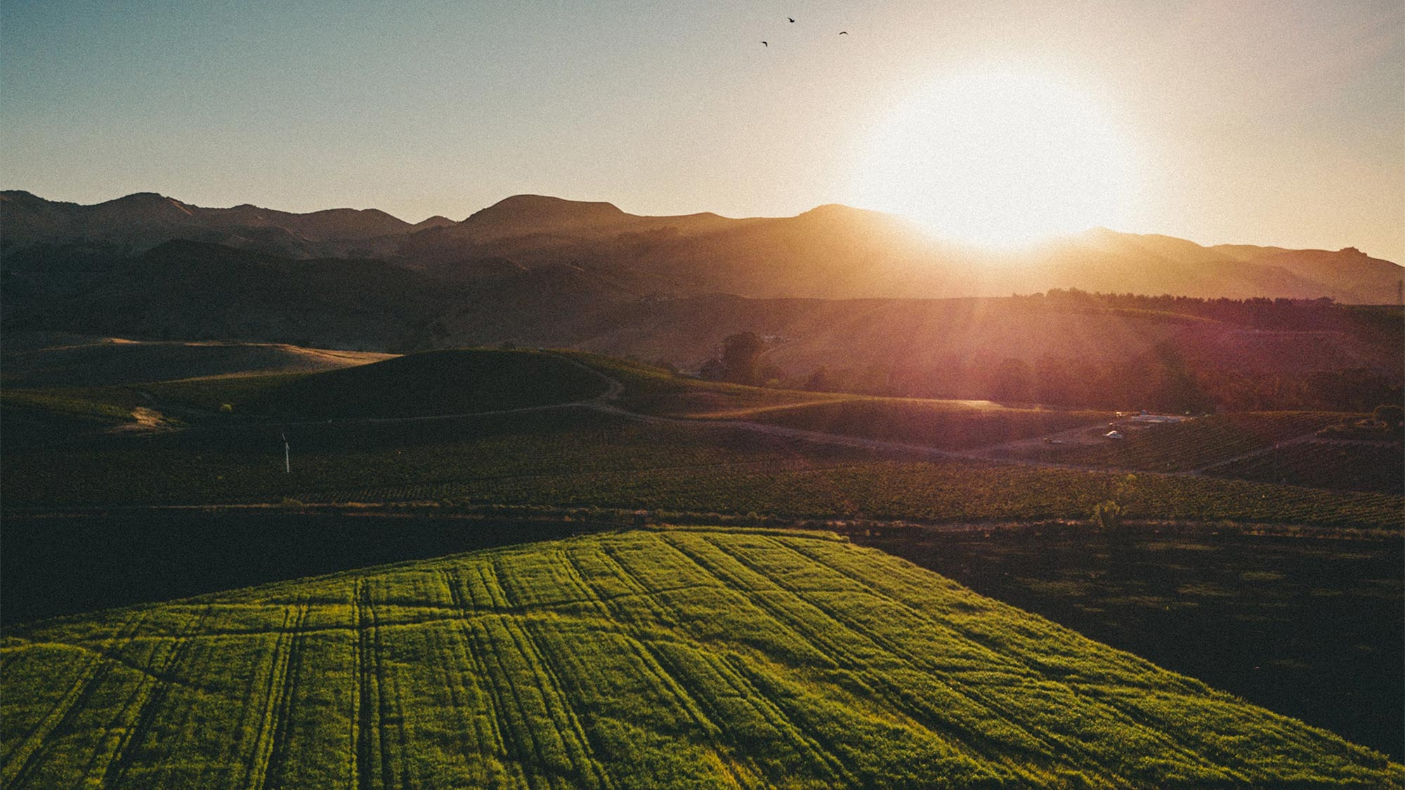 How sustainable leather is supported by regenerative agriculture